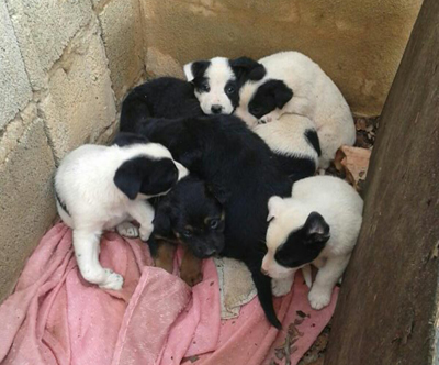 Cachorros recogidos en Alginet en 2015